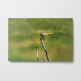 Dragonfly on a stick Metal Print
