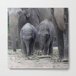 Elephant_20170601_by_JAMFoto Metal Print