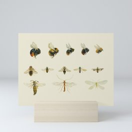 Study of bees and other insects Mini Art Print