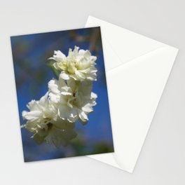 Deutzia Cream Petals Against Blue Sky Stationery Cards
