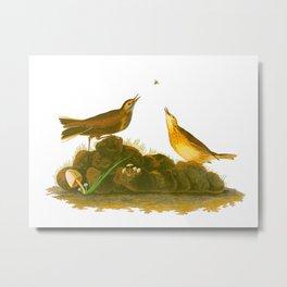 Brown Lark Bird Metal Print