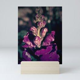 Lupinus-Purple Mini Art Print