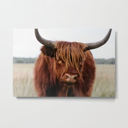 Close up of a Wild Scottish Highlander cow in national park | Cattle in Nature | Veluwe park, the Netherlands | Travel photography Metal Print