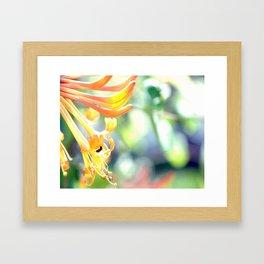 Honeysuckle ad Bee Spring Framed Art Print