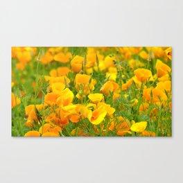 Yellow field Canvas Print
