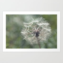 Tragopogon -Meadow Salsify 43 Art Print