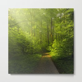 Autumn Forest Nature Landscape Metal Print