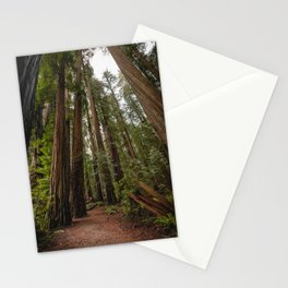 Redwood Forest Adventure VII - Nature Photography Stationery Cards