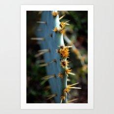 a south Texas cactus.  Art Print