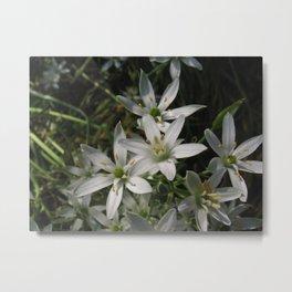 White Star Cluster--Photography Prints Metal Print