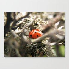 Make a spotty wish! Canvas Print