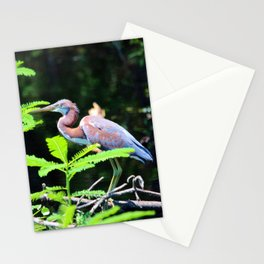 Juvenile Tricolored Heron Stationery Cards