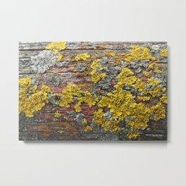 Colorful bark Metal Print
