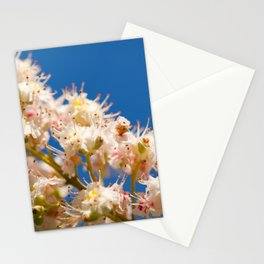 Macro of blooming Aesculus Stationery Cards