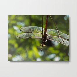 Dragonfly Summer Metal Print