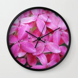 Pink Ixora Wall Clock