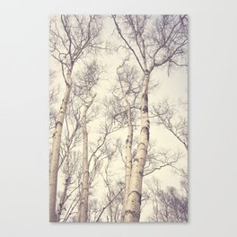 Winter Birch Trees Canvas Print