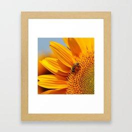 Sunflower & Bee Framed Art Print