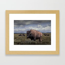 American Buffalo or Bison in the Grand Teton National Park Framed Art Print