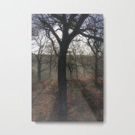 Highlighted Oaks Metal Print