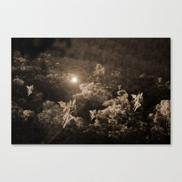 Fairies of the Forest Canvas Print