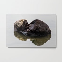 Sleeping  Sea Otter Metal Print