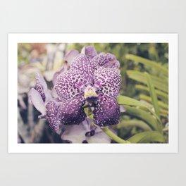 Purple Vanda Orchid Art Print
