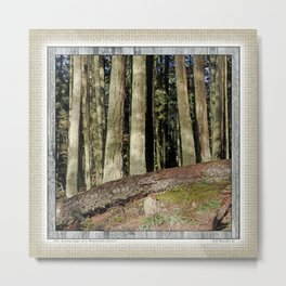THE SUNNY EDGE OF A MOUNTAIN FOREST Metal Print