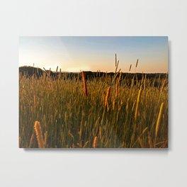 Summer Meadow Sunset Metal Print