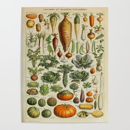 VEGETABLES Legumes Et Plantes Potageres Vintage Scientific Illustration French Language Encyclopedia Poster