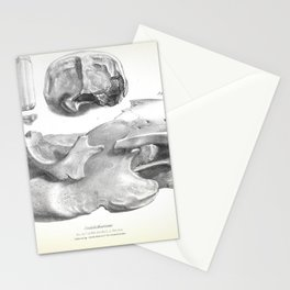 The Zoology of the Voyage of H.M.S. Beagle 1840 - Fossil Mammalia - Scelidotherium Skull Stationery Cards