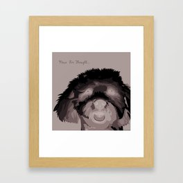 Travis The Schnoodle Framed Art Print