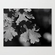 Sunlit Oak Leaf Canvas Print