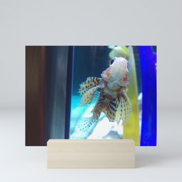 Baby Lionfish Mini Art Print