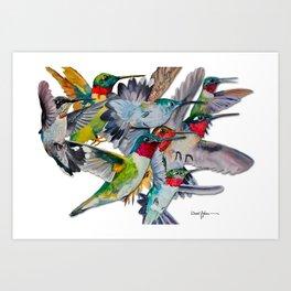 Multi Hummingbirds Art Print