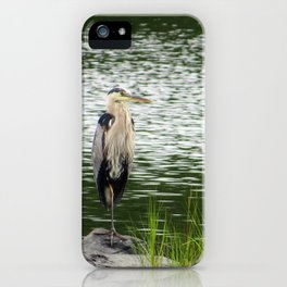 Great Blue Heron - Standing Stately iPhone Case
