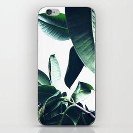 Ficus Elastica #26 #foliage #decor #art #society6 iPhone Skin