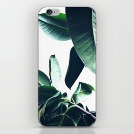 Ficus Elastica #26 #foliage #decor #art #society6 iPhone Skin