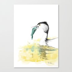 Haubentaucher Canvas Print