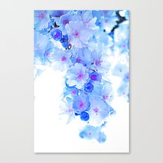 Cherry Blossom.Blue Canvas Print