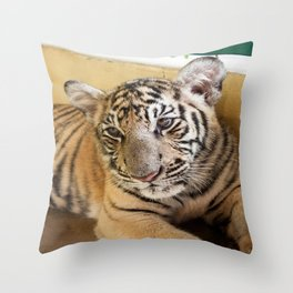 Tiger, Small Indo-China  Throw Pillow