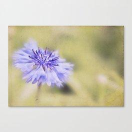 Wild Cornflower Canvas Print
