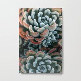 Autumn Succulent #1 Metal Print