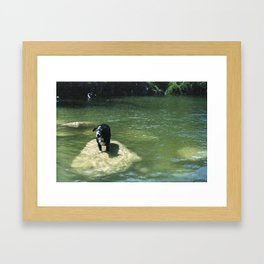Chill Dog Framed Art Print