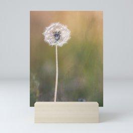 Lonely Dandelion Mini Art Print
