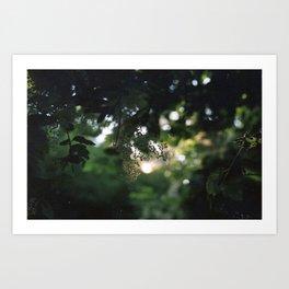 Sunlit Nature Art Print