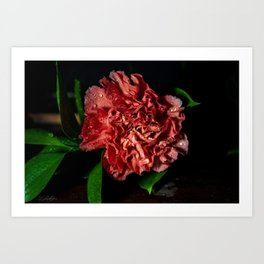 Floral Untitled .13 Art Print