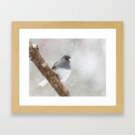 Dark-eyed Junco Framed Art Print