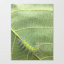 My green friend.  Canvas Print