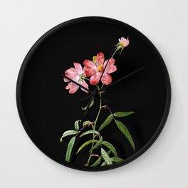 Vintage Peach Leaved Rose Botanical Illustration on Black (Portrait) Wall Clock